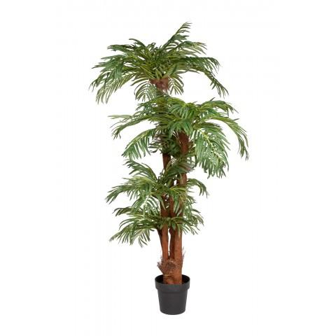 Kokos arecapalm 170 cm